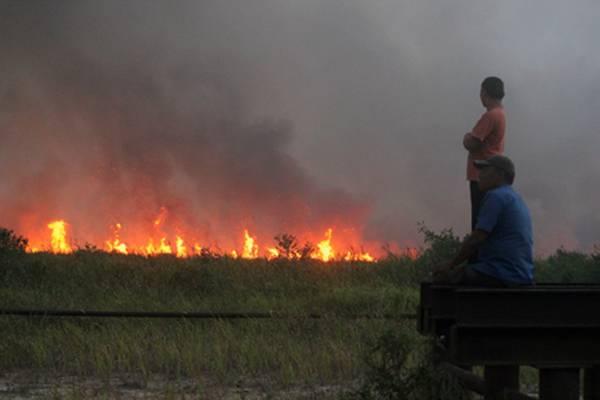 ilustrasi kebakaran hutan dan lahan